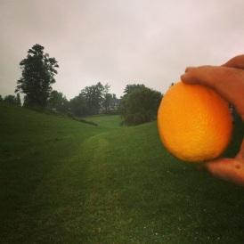 orange-1, snakes-0